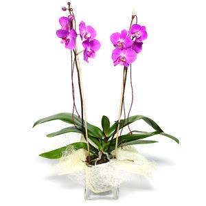 Hatay uluslararası çiçek gönderme  Cam yada mika vazo içerisinde  1 kök orkide