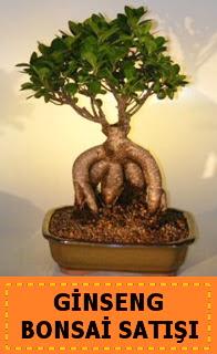 Ginseng bonsai satışı japon ağacı  Hatay çiçek yolla , çiçek gönder , çiçekçi