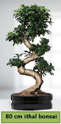 80 cm özel saksıda bonsai bitkisi  Hatay cicekciler , cicek siparisi