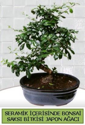 Seramik vazoda bonsai japon ağacı bitkisi  Hatay çiçek servisi , çiçekçi adresleri