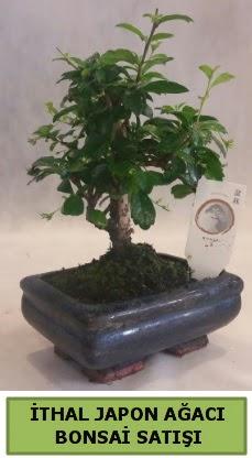 İthal japon ağacı bonsai bitkisi satışı  Hatay cicekciler , cicek siparisi
