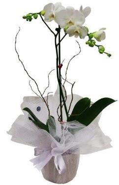 Tek dallı beyaz orkide  Hatay çiçek yolla , çiçek gönder , çiçekçi