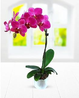 Tek dallı mor orkide  Hatay uluslararası çiçek gönderme