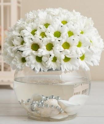 Fanusta beyaz Papatya  Hatay uluslararası çiçek gönderme