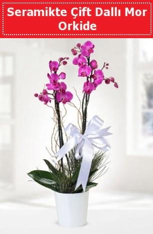 Seramikte Çift Dallı Mor Orkide  Hatay çiçek gönderme