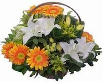 Hatay internetten çiçek satışı  sepet modeli Gerbera kazablanka sepet