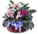 Hatay çiçek siparişi vermek  5 adet menekse sepet özel