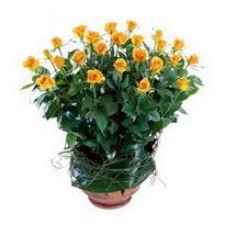 Hatay İnternetten çiçek siparişi  10 adet sari gül tanzim cam yada mika vazoda çiçek