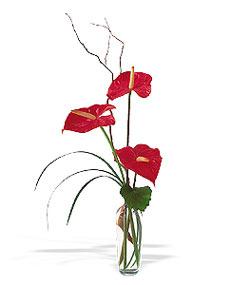 Hatay çiçek servisi , çiçekçi adresleri  cam yada mika Vazoda 3 adet  antoryum
