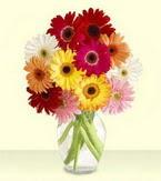 Hatay çiçekçiler  cam yada mika vazoda 15 özel gerbera