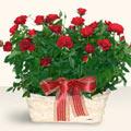 Hatay internetten çiçek siparişi  11 adet kirmizi gül sepette