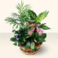 Hatay uluslararası çiçek gönderme  5 adet canli çiçek sepette