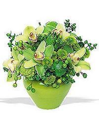 cam yada mika vazoda 5 adet orkide   Hatay internetten çiçek satışı