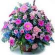 karisik mevsim kir çiçekleri  Hatay çiçek siparişi vermek