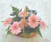 gerbera çiçeklerinde sepet   Hatay online çiçek gönderme sipariş