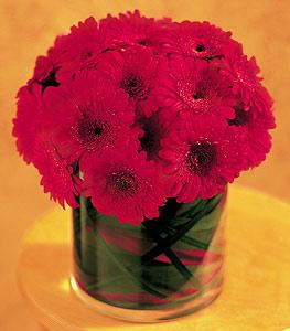 Hatay anneler günü çiçek yolla  23 adet gerbera çiçegi sade ve sik cam içerisinde