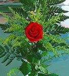 1 adet kirmizi gül buketi   Hatay yurtiçi ve yurtdışı çiçek siparişi