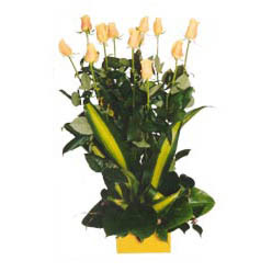 12 adet beyaz gül aranjmani  Hatay hediye çiçek yolla