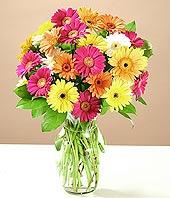 Hatay çiçek satışı  17 adet karisik gerbera