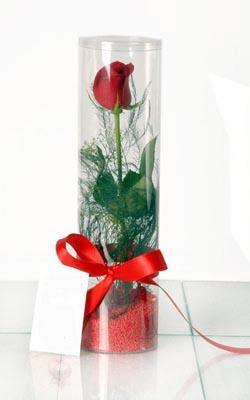 Hatay online çiçek gönderme sipariş  Silindir vazoda tek kirmizi gül
