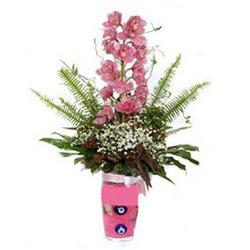Hatay hediye sevgilime hediye çiçek  cam yada mika vazo içerisinde tek dal orkide çiçegi