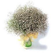 Hatay ucuz çiçek gönder  cam yada mika vazo içerisinde cipsofilya demeti