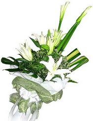 Hatay çiçekçi mağazası  3 dal kazablanka çiçegi ve yesillikler