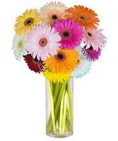 Hatay güvenli kaliteli hızlı çiçek  Farkli renklerde 15 adet gerbera çiçegi