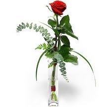 Hatay çiçek yolla  Sana deger veriyorum bir adet gül cam yada mika vazoda