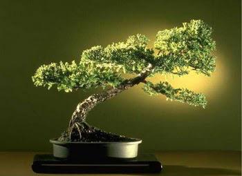 ithal bonsai saksi çiçegi  Hatay çiçek online çiçek siparişi