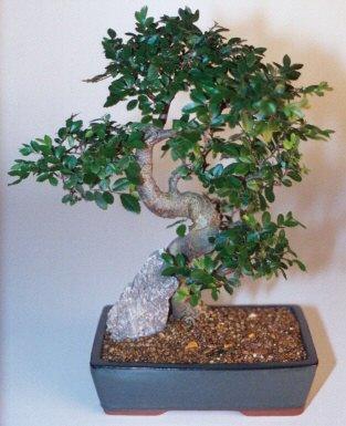Hatay çiçek siparişi vermek  ithal bonsai saksi çiçegi  Hatay çiçek servisi , çiçekçi adresleri