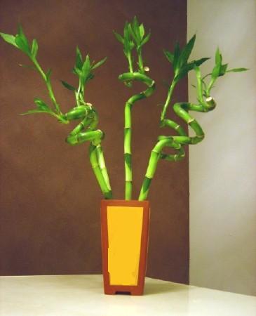 Lucky Bamboo 5 adet vazo içerisinde  Hatay çiçek mağazası , çiçekçi adresleri