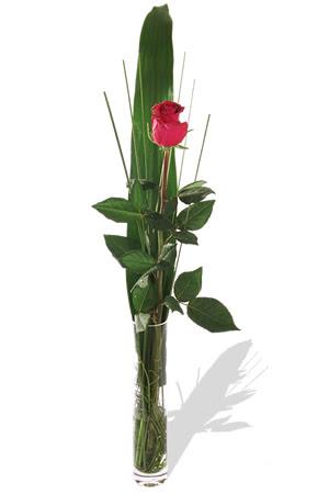 1 adet cam vazo içerisinde kirmizi gül  Hatay 14 şubat sevgililer günü çiçek