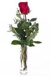 Vazo içerisinde 1 adet kirmizi gül  Hatay İnternetten çiçek siparişi