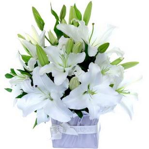 Hatay online çiçek gönderme sipariş  2 dal cazablanca vazo çiçeği