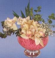 Hatay ucuz çiçek gönder  Dal orkide kalite bir hediye