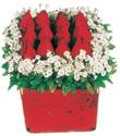 Hatay cicek , cicekci  Kare cam yada mika içinde kirmizi güller - anneler günü seçimi özel çiçek