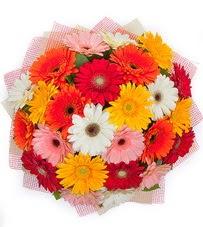 15 adet renkli gerbera buketi  Hatay çiçek siparişi sitesi