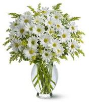 Vazo içerisinde beyaz krizantem çiçekleri  Hatay çiçek online çiçek siparişi