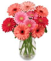 vazo içerisinde 13 adet gerbera çiçeği  Hatay çiçek servisi , çiçekçi adresleri