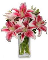 Vazo içerisinde 5 dal kazablanka çiçeği  Hatay İnternetten çiçek siparişi