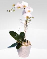 1 dallı orkide saksı çiçeği  Hatay internetten çiçek satışı