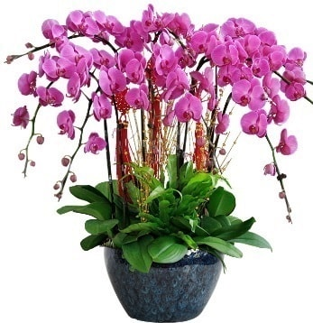 9 dallı mor orkide  Hatay çiçek yolla