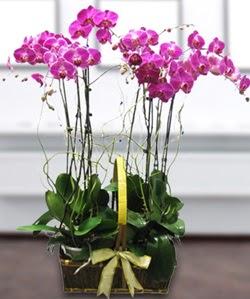 4 dallı mor orkide  Hatay çiçekçi mağazası