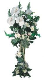 Hatay ucuz çiçek gönder  antoryumlarin büyüsü özel