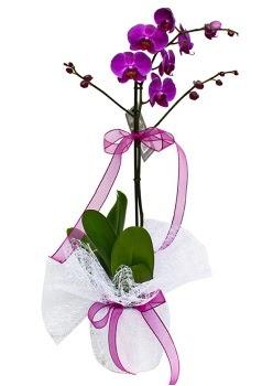 Tek dallı mor orkide  Hatay cicekciler , cicek siparisi