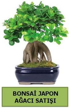 Bonsai japon ağacı satışı  Hatay uluslararası çiçek gönderme