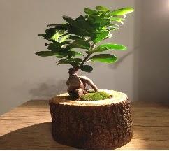 Doğal kütükte Bonsai japon ağacı satışı  Hatay çiçek mağazası , çiçekçi adresleri