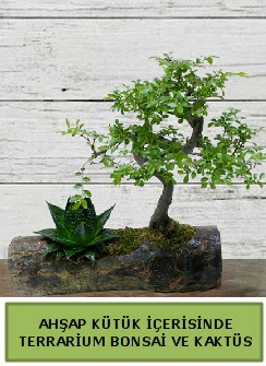 Ahşap kütük bonsai kaktüs teraryum  Hatay güvenli kaliteli hızlı çiçek