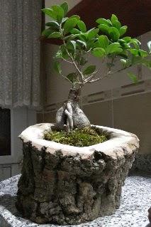 Ahşap kütük içerisinde ginseng bonsai  Hatay güvenli kaliteli hızlı çiçek